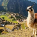 South_America_Road_Trips