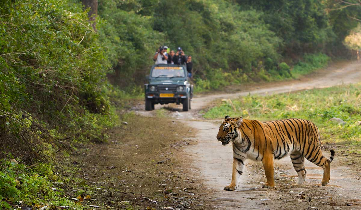 Day 11 - Jim Corbett National Park