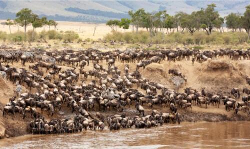 Wildebeest Migration, Kenya & Tanzania